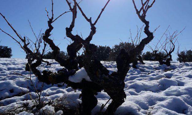 Nace la asociación Bodegas Viñas Viejas de Soria